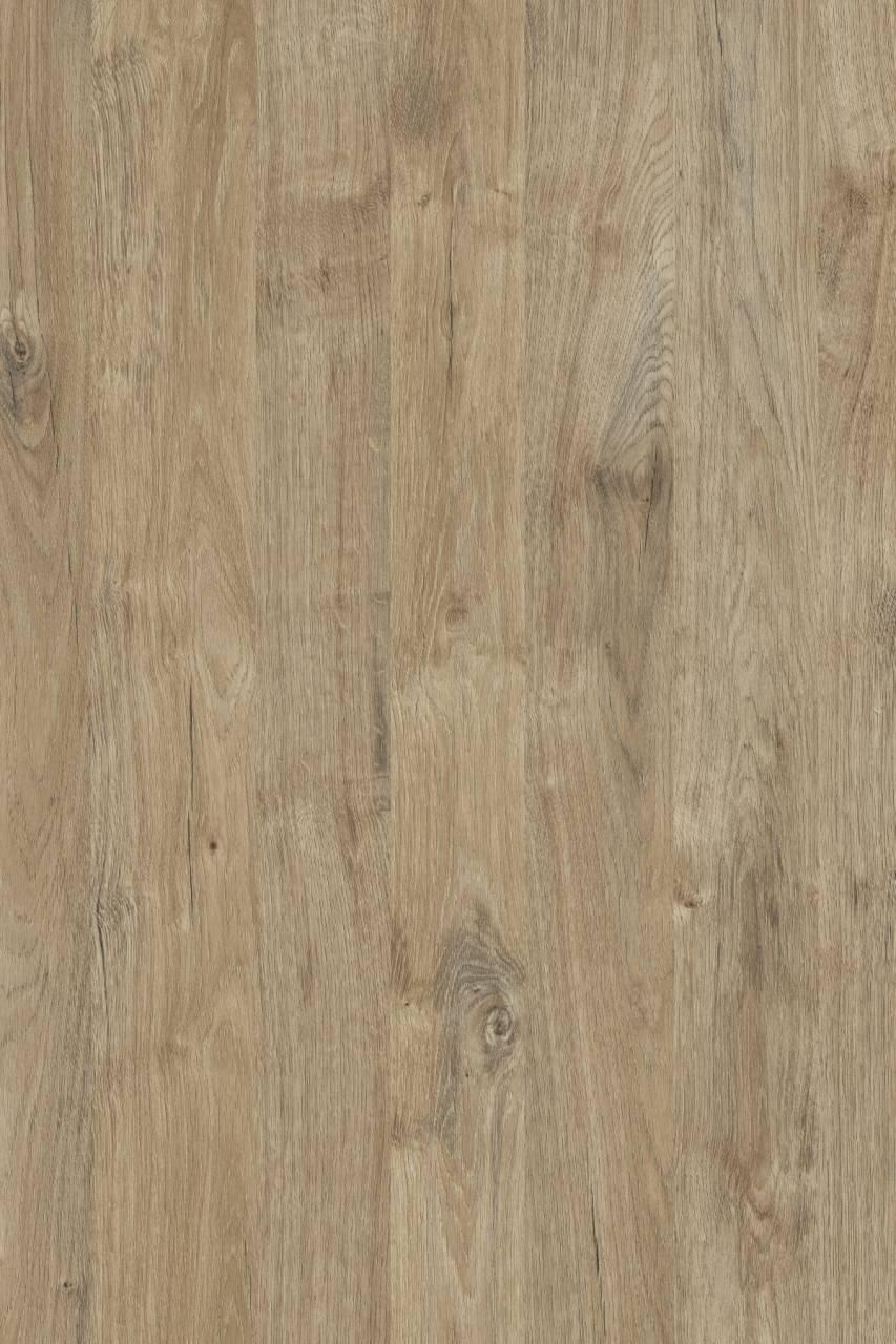 K361 Gold Harbor Oak (MF PB sample)